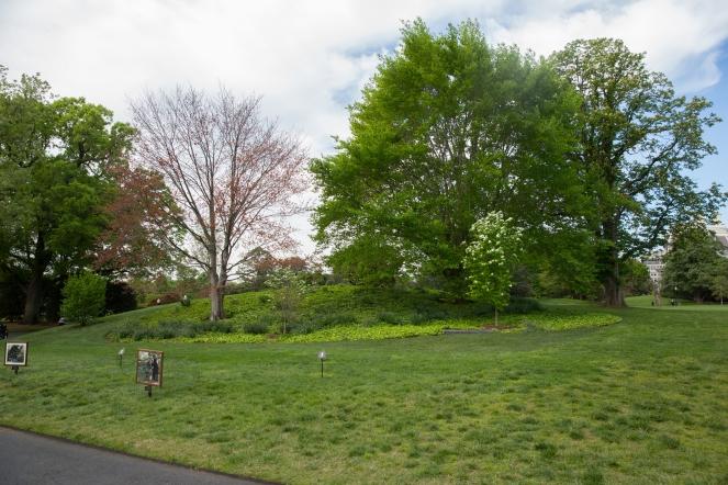 White House garden-3