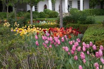 White House garden-30