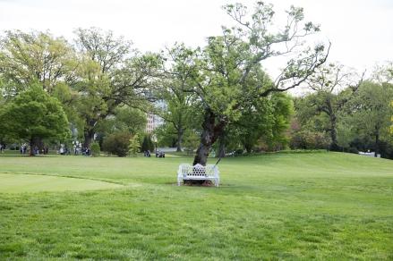 White House garden-34