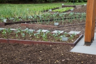 White House garden-61